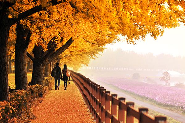 Mùa thu lãng mạn tại Hàn Quốc