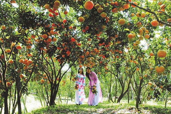 Vườn cây trái miệt vườn
