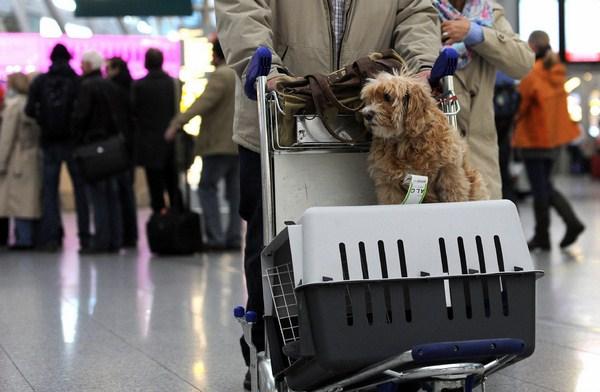 Quy định khi mang thú cưng lên máy bay