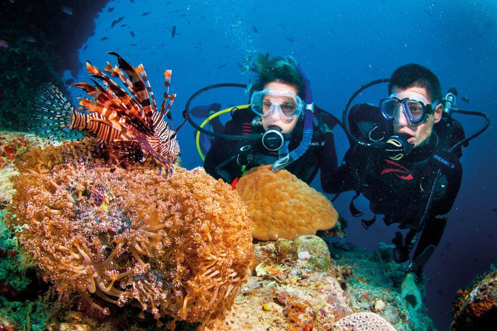 Lặn ngắm san hô - khám phá thiên đường dưới nước