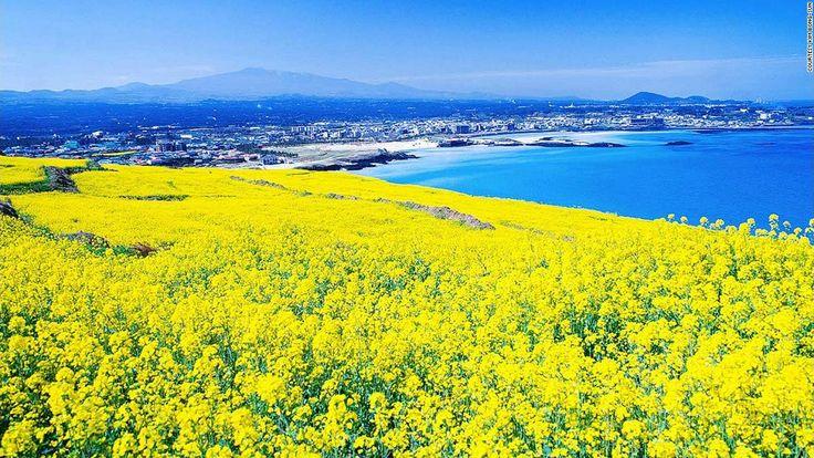 Đảo Jeju sự hòa quyện tuyệt hảo giữa thiên nhiên