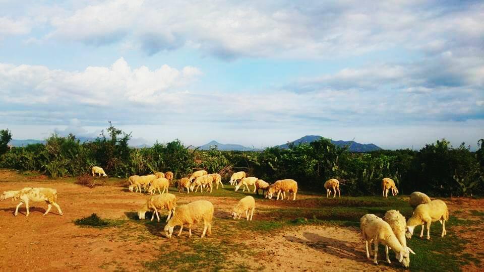 Những địa điểm du lịch nổi tiếng tại Ninh Thuận