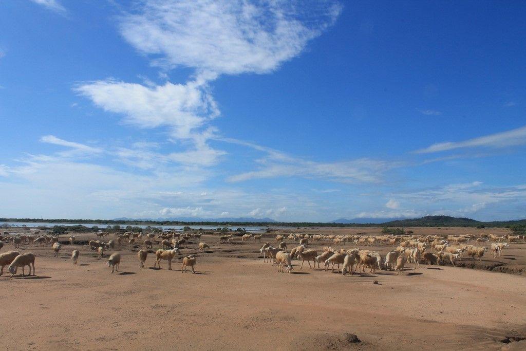 Vườn cừu An Hòa