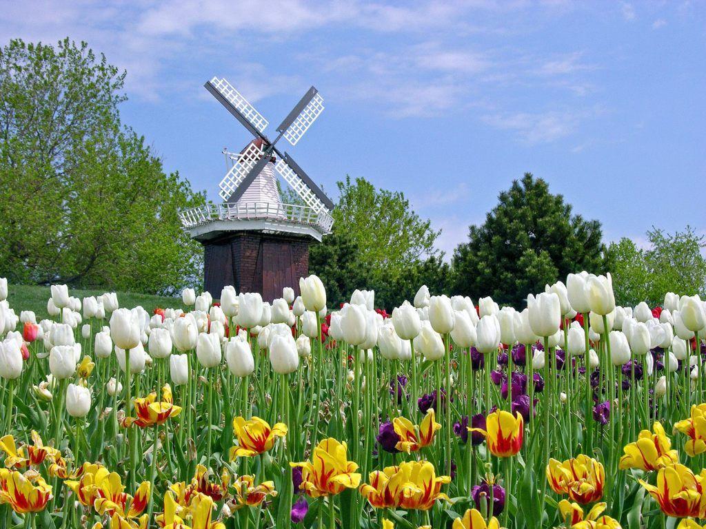 Thời tiết ở Hà Lan
