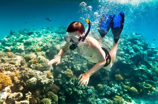 Lặn ngắm san hô tại bán đảo Sơn Trà