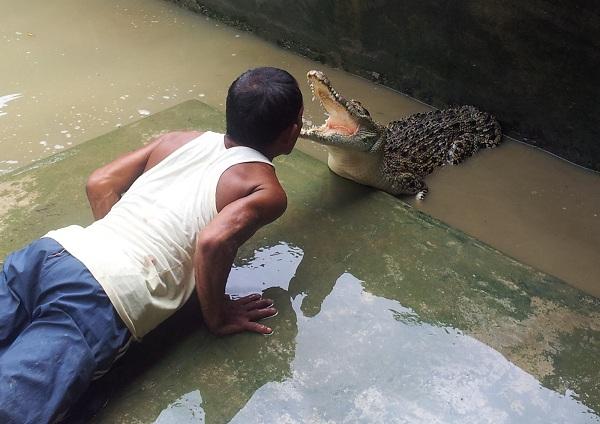 Trang trại cá sấu Thaketa