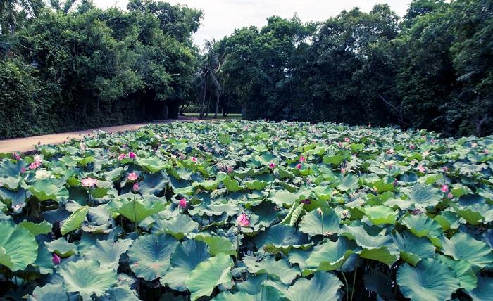Làng Sen Bác Hồ